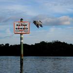 White Pelican Club