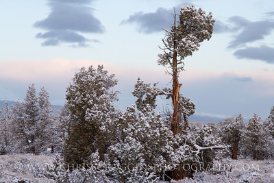 Early Morning Snow, Oregon High Desert.