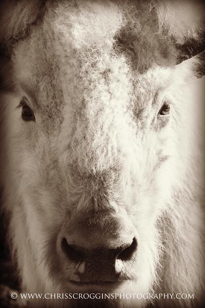 Portrait of Peace Pilgrim.