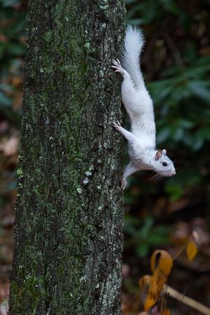 WhiteSquirrel