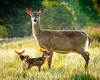Doe and Newborns