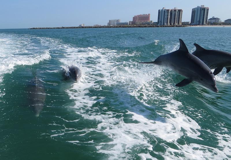 Dolphin_0775