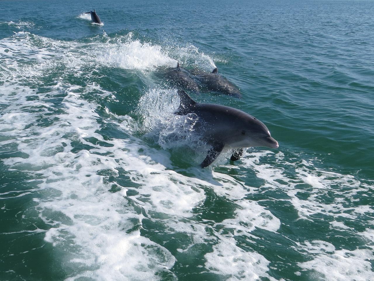 Dolphin_0779