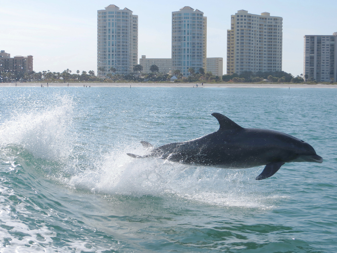 Dolphin_0790