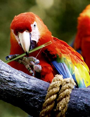 Parrot_Nesting_4058
