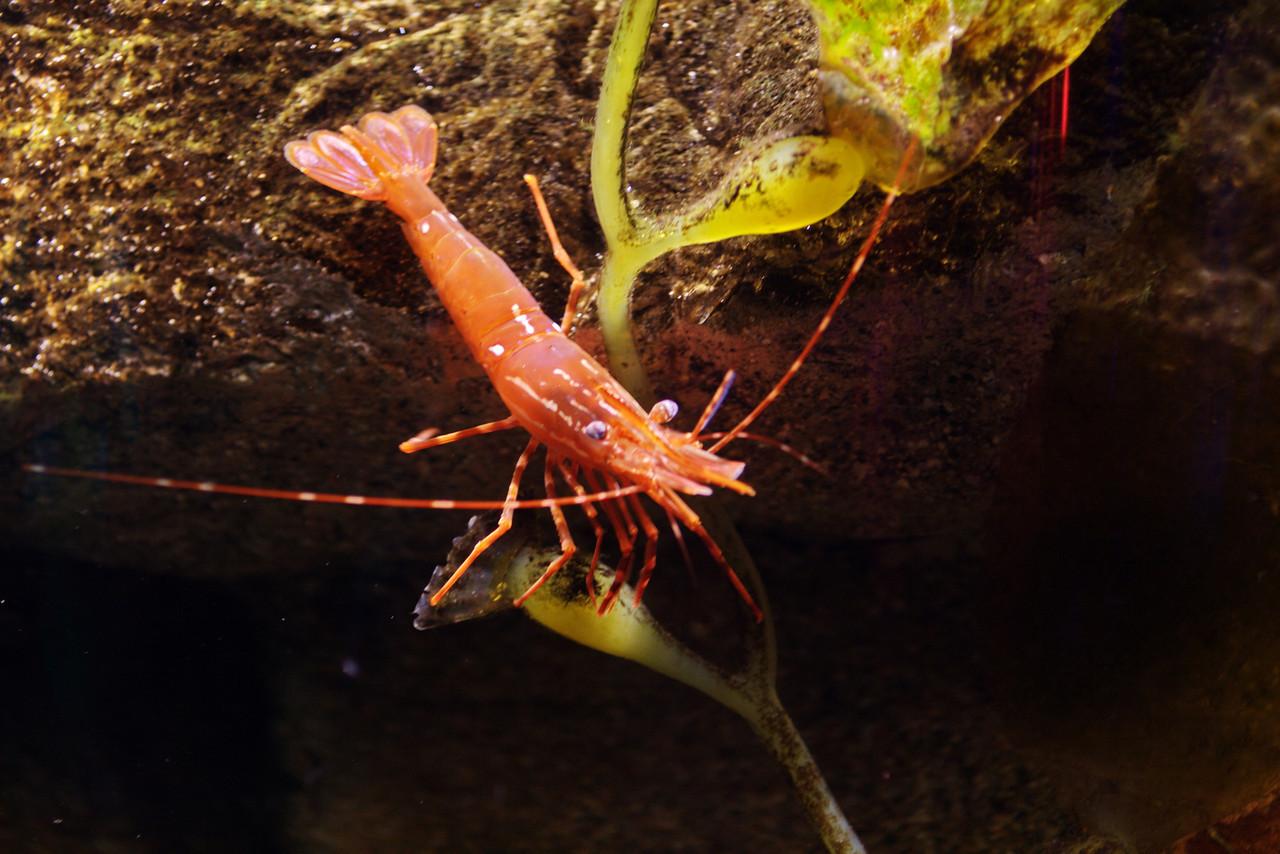 Lobster_0192