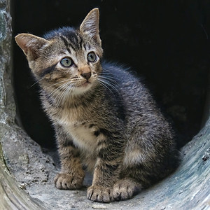 Wild Cat & Kittens