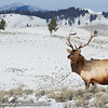 Elk Expanse