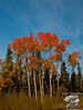 Orange-topped birch trees punctuate the scenery on the Dalton Highway near the Arctic Circle.