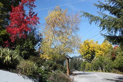 Various autumn trees