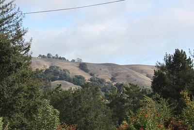 Silvery hillside