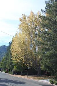 Autumn leaves and hazy sunshine