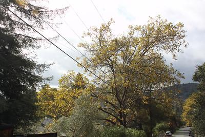 Autumn trees along center of Valencia