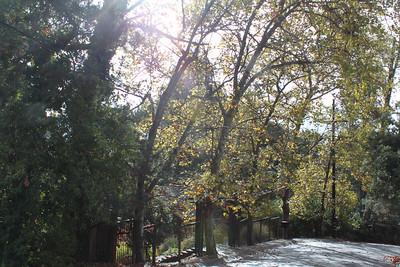 Autumn trees on top of Valencia