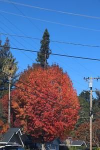 Autumn red in California