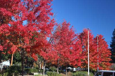 Trees in front of Del Rey