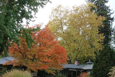 Orange and yellow autumn foliage