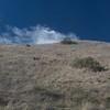 Silvery grasses near substation