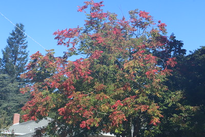 Tree starting to change color