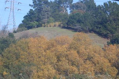 Autumn leaves, winter stalks, spring grass