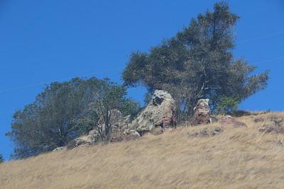 Barren hillside with sun damaged oak trees