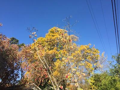 Trees losing their leaves