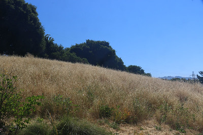 Sea of dried out grasses
