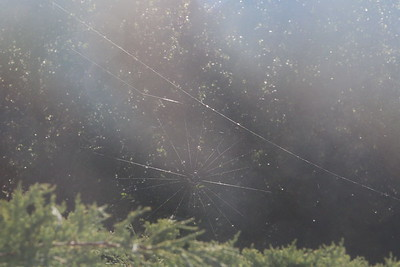 A large spider web above a shrub