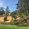 Fallen tree branch next to middle school