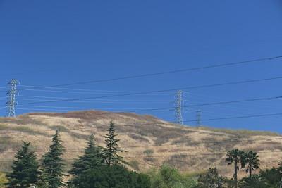 Hillside grasses above residential trees