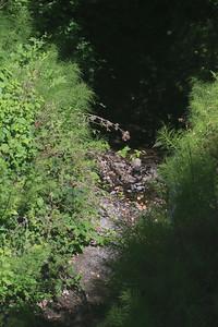 Moraga creek drying up