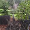 Photo of fallen tree taken in portrait orientation