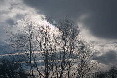 Dramatic sky behind tree branches