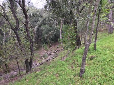 Fallen branches along a hillside