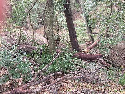 Trunk of fallen tree in creek