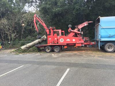 Tree trunk being shredded