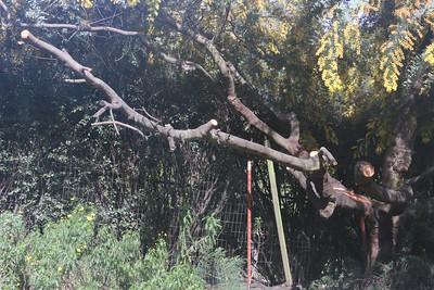 Remaining wood of broken branch
