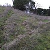 Decaying stalks replaced by new grasses