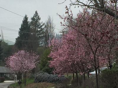 Blooming trees in the gloom