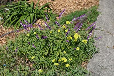 Buttercup Oxalis bouquet