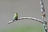 _ASP2070 Hummer Female