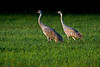 Sand Cranes 2