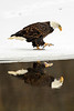_ASP8231 Eagle Reflection V