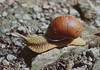 Snail on its way