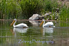 A serene moment as a pair of pelicans add to a perfect setting on this secluded pond in northern Nevada.