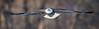_ASP7430 Eagle in flight pr 24x7 pano