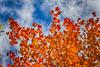 firey_leaves