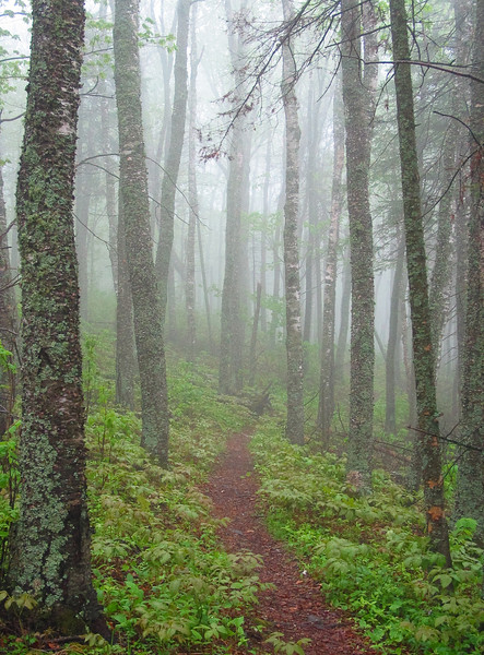 A foggy morning on the Superior Hiking Trail.