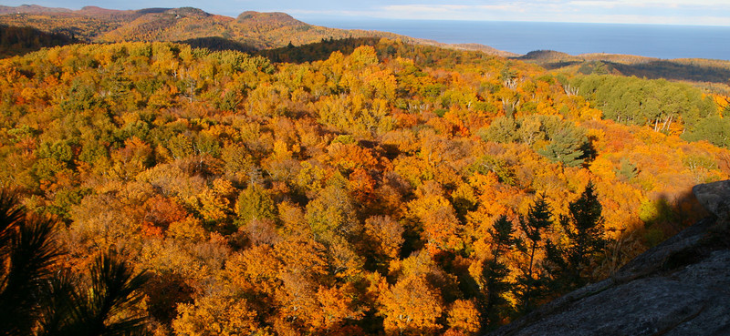 Fall colors in bright sunlight, Lake Superior Hiking Trail.