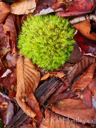 Forest floor - moss and leaves.